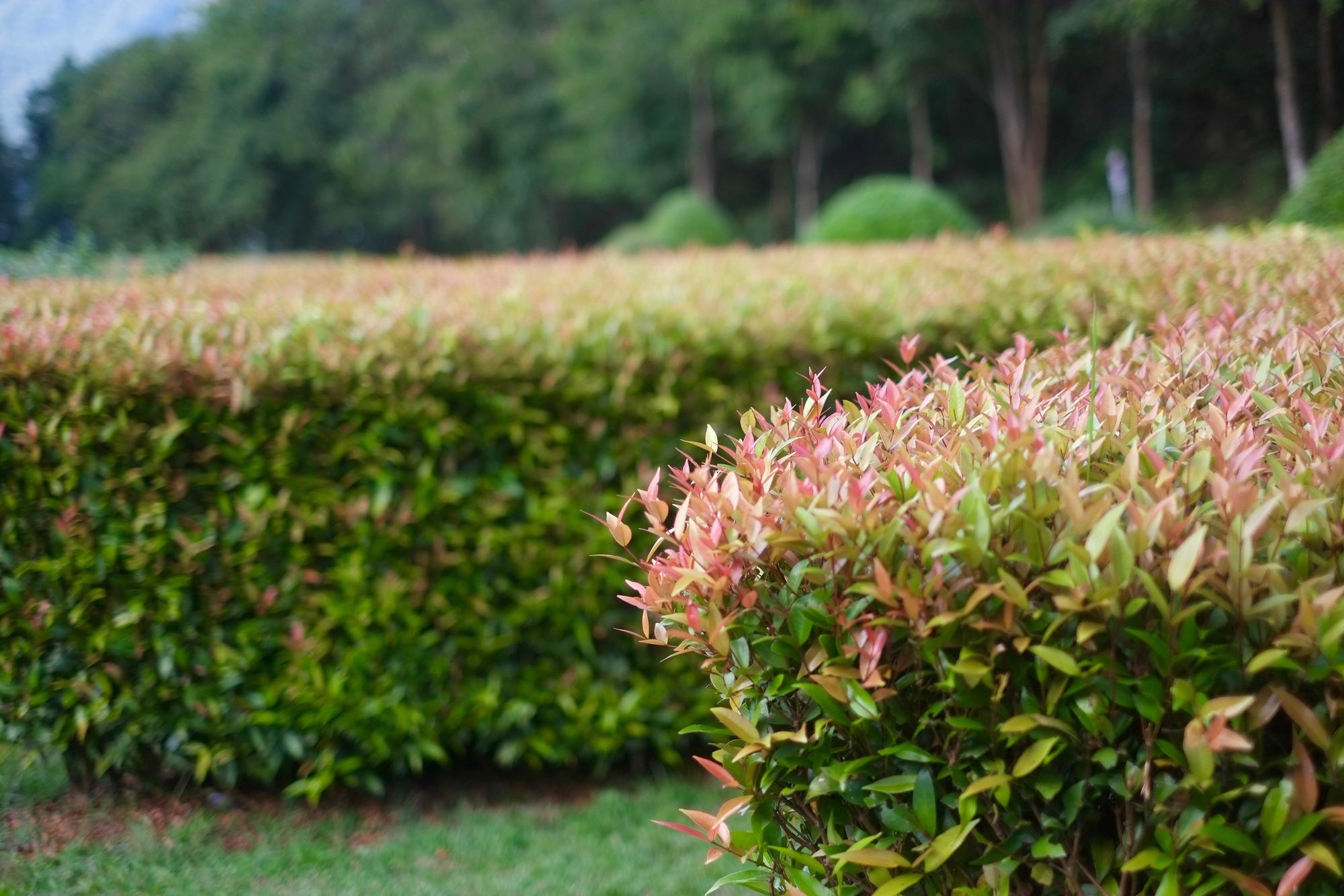So halten Sie den Pflegeaufwand für Ihren Garten gering So muss