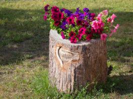 Baumstumpf im Garten