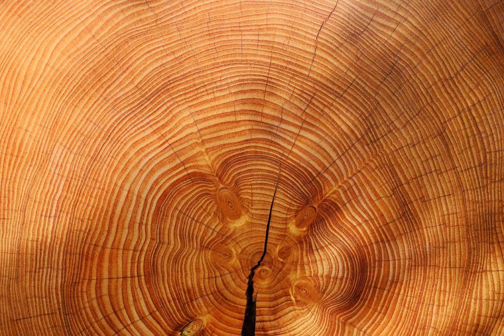 Fichte-Holz-Jahresringe