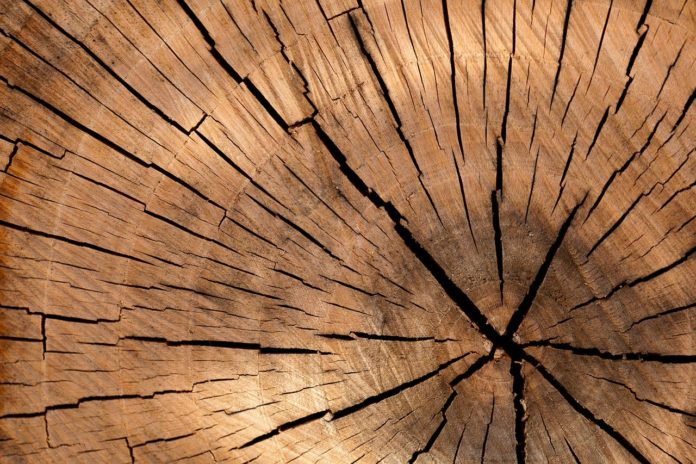 Holz-ist-ein-naturprodukt