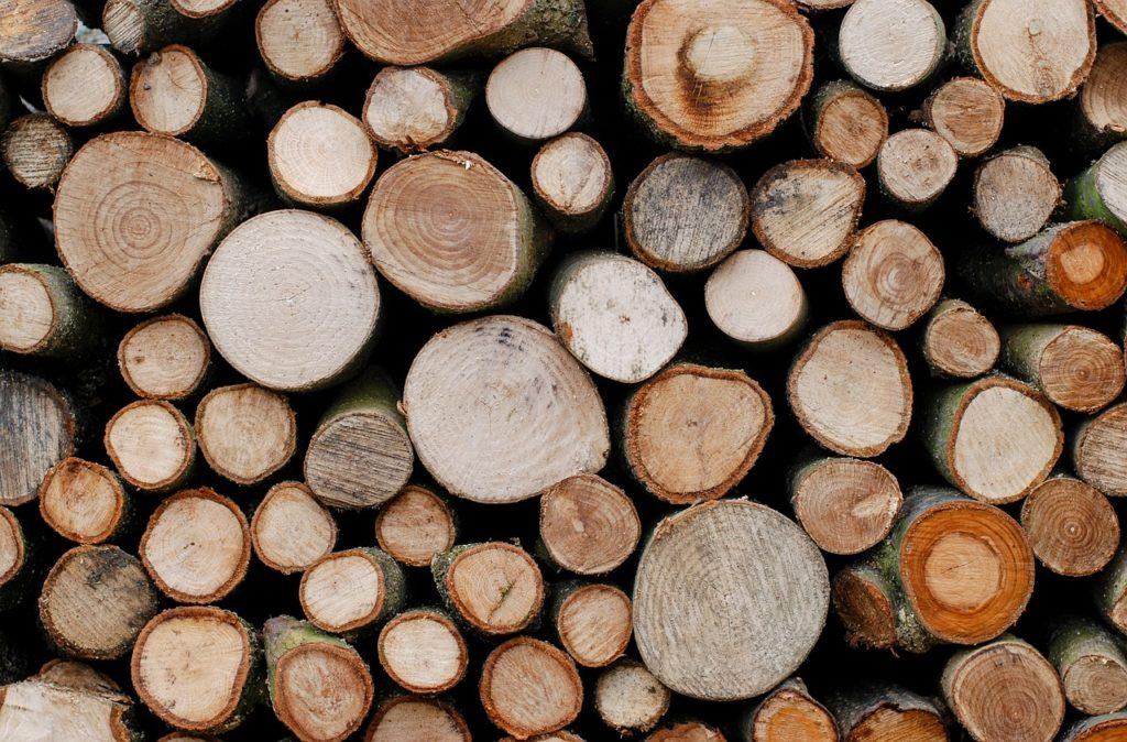Holzarten-Baumstaemme