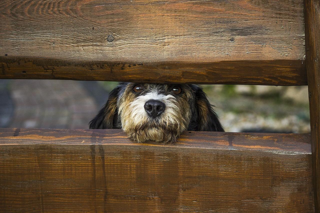 Holzzaun-Hund