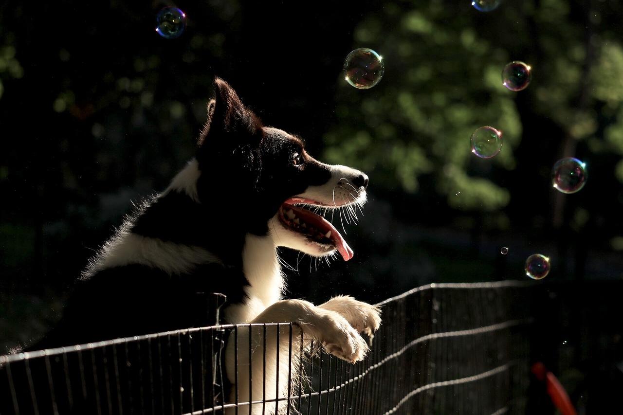 Hund-Gartenzaun-Seifenblasen
