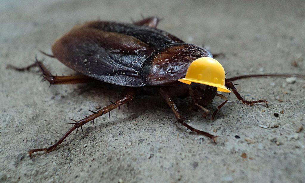 Kakerlaken