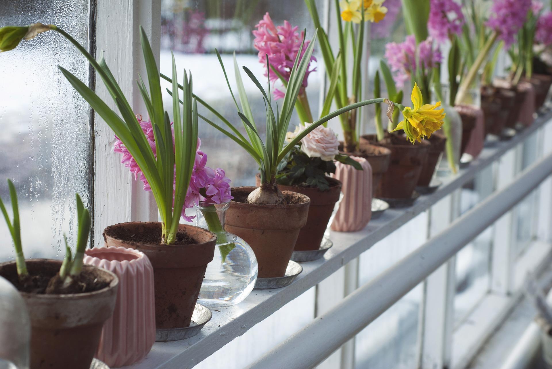 bunte Blumen im Gewächshaus