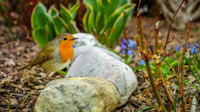 Minigarten anlegen