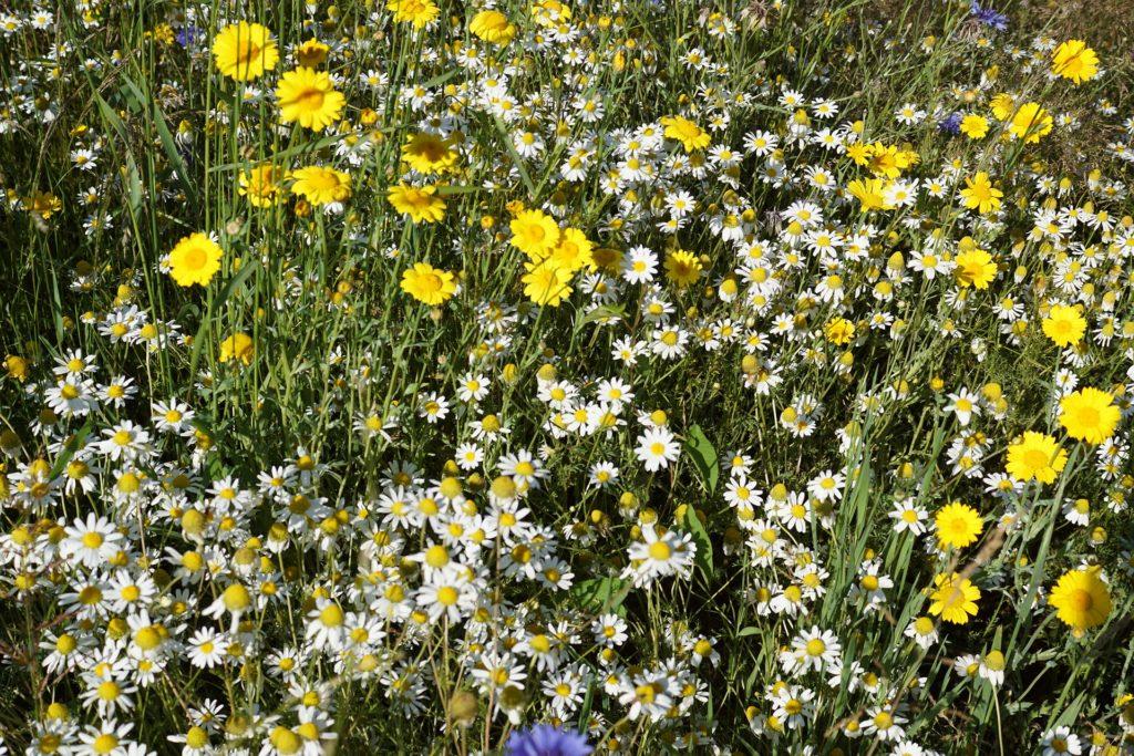 Minigarten Blumen