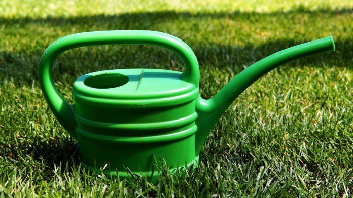rasen-bewässern-gießkanne