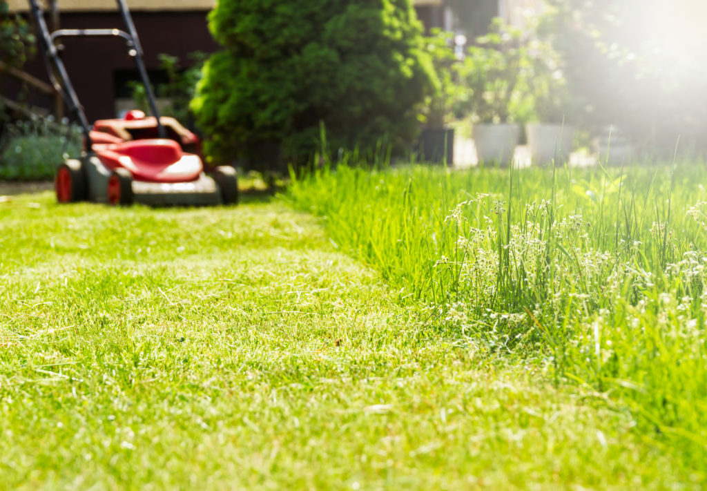 Mai - Zeit zum Rasenmähen