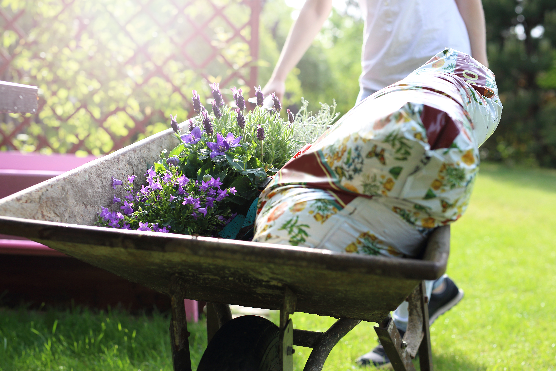 Schubkarre mit Pflanzen