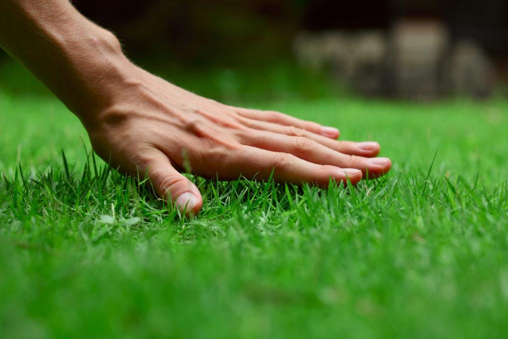 grünes gras in einem ökologisches garten