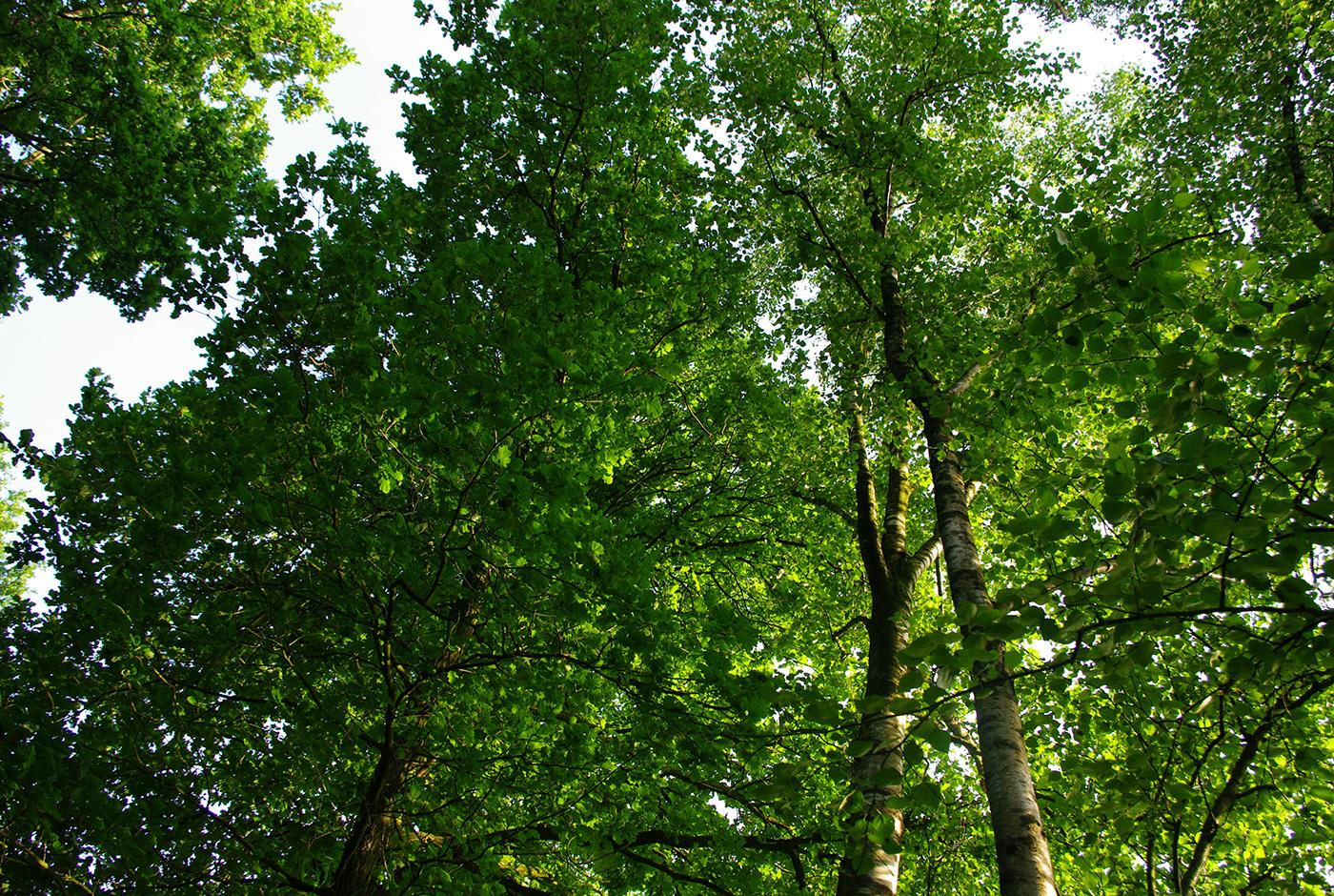 Tag Des Baumes 10 Tipps Wie Holzelemente Ihren Garten Verschonern